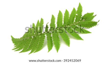Thick green fern growth