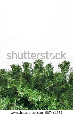 thick green fir branches isolated.
