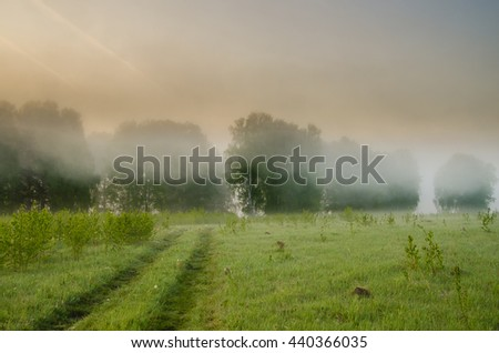 thick morning fog in the summer forest. thick morning fog in the forest at pond. Morning landscape in summer thick fog. dense fog in the morning.  early morning. forest hiding in the fog. forest path  - stock photo