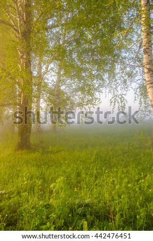 thick morning fog in the summer forest. thick morning fog in the forest at pond. Morning landscape in summer thick fog. dense fog in the morning.  early morning. forest hiding in the fog. - stock photo