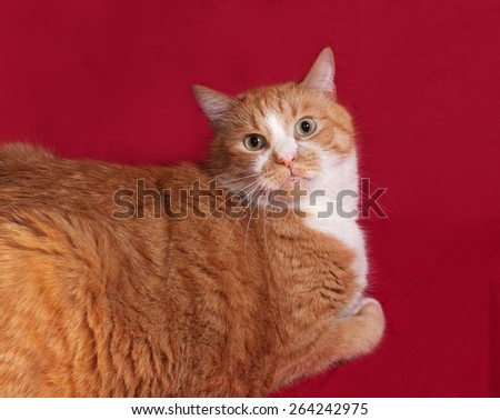 Thick red cat lying on red background
