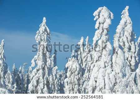 Thick snow covered trees in Koli National Park - stock photo