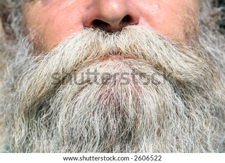 thick white and grey beard, macro detail photo, close up - stock photo