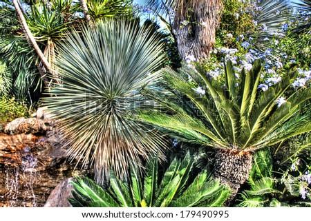 Thickets of tropical plants - stock photo