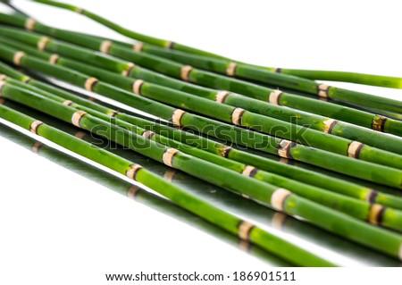 Thin bamboo grove - stock photo