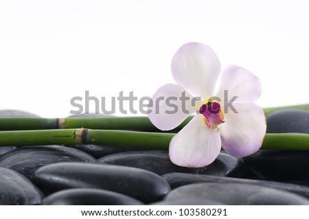 Thin grove and white orchid on pebbles - stock photo