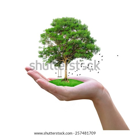 Think Green Ecological concept, with the tree on the hand. And birds that fly Isolated on white background with clipping path. - stock photo