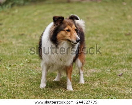 Thinking dog - stock photo