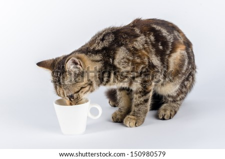 Thirsty cat drinking water from a small white cup - stock photo