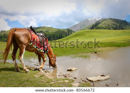 Thirsty Horse Thirsty horse in Seri Paya, Pakistan Seri Paya is a plateau above the hill station of Shogran. The views are breathaking - stock photo