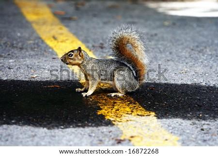 Thirsty Squirrel - stock photo