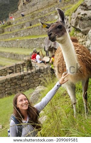 This Alpaca were seen in the ruins of Machu Picchu in Peru - stock photo