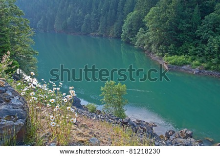 This deep green Skagit River is near Ross Lake in Washington state has an evergreen forest on both sides of the ravine, wild daisies and boulders shoulder the edges. - stock photo