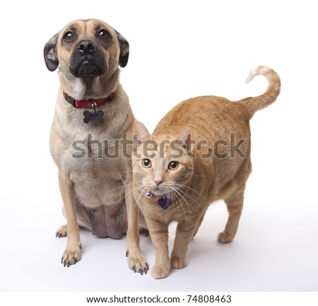This dog and cat get along long enough for a photo. Both have blank tags visible on their collars. - stock photo