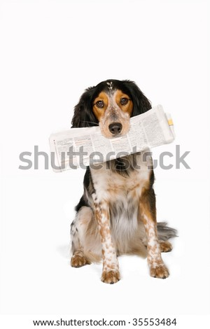 This dog just fetched the newspaper - stock photo