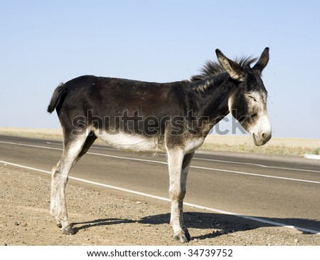 This donkey is curious and has no fear
