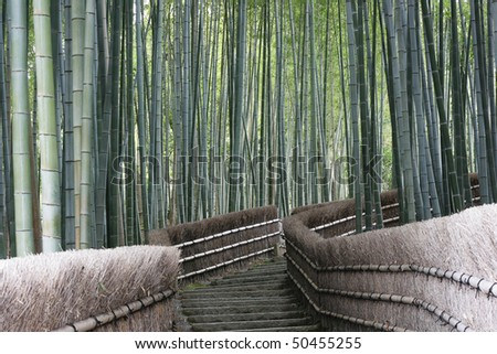 This ia a bamboo forest near Kyoto, Japan.  Bamboo is a fast growing grass and forms mysterious looking forests. - stock photo