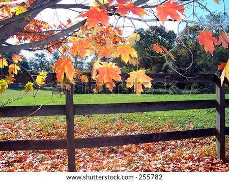 This is a backlit photo of some fall leaves with a fence in the background.