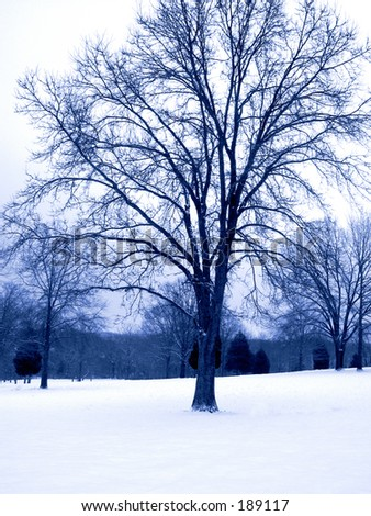 This is a blue duo-tone of a winter scene taken at a state park in New Jersey. - stock photo