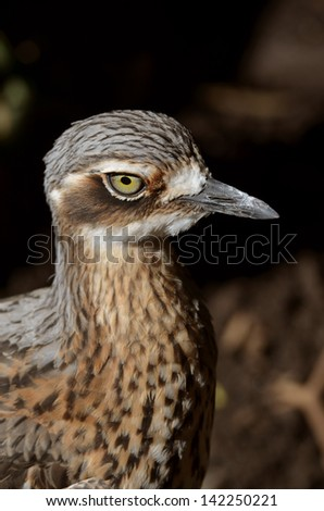 this is a close up of a curlew