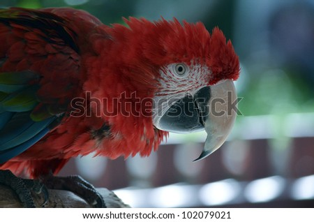 this is a close up of a green winged macaw landscape