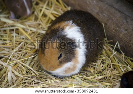 This is a close up of a hamster in hay