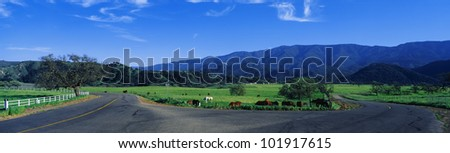 This is a country intersection with a fork in the road. It is located in the Santa Ynez Mountains. It is spring and there are horses grazing near the road. - stock photo