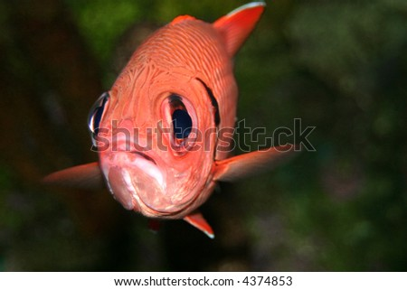 This is a fish in an aquarium fish tank. - stock photo