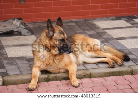 This is a funny dog living outdoors. - stock photo
