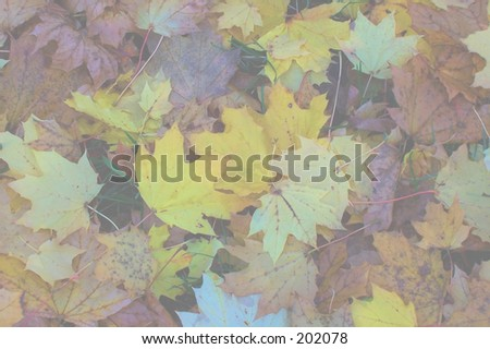 This is a ghosted background of some fall leaves.