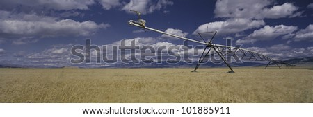 This is a golden field of wheat with its irrigation device. - stock photo