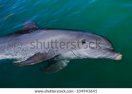 This is a happy dolphin which is playing around in the ocean. - stock photo