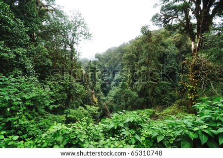 This is a Hill Evergreen Forest in Chiang Mai, Thailand - stock photo