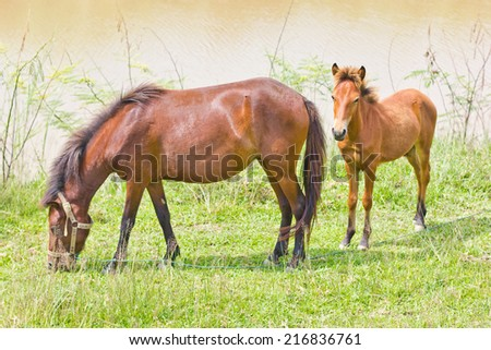 This is a horse it's have a brown color - stock photo