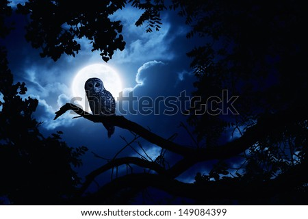 This is a photo illustration of a quiet night, a bright moon rising over the clouds illuminates the darkness, and a Barred Owl sits motionless in the blue moonlight. All my own components. - stock photo