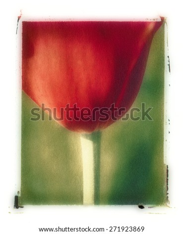 This is a polaroid transfer image of a blooming red tulip. The photograph was taken with slide film and projected on a polaroid film to create the artistic image. - stock photo