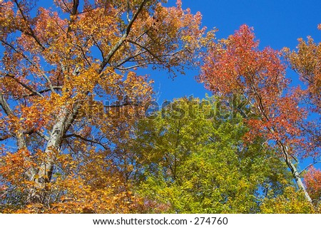This is a shot of a rich blue sky and some nice fall colors.