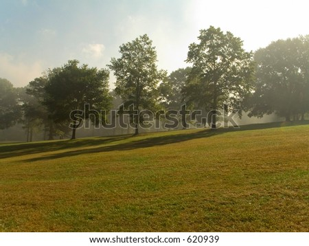 This is an early morning shot of group of trees on a foggy hillside. - stock photo