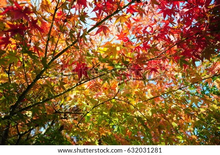 https://thumb7.shutterstock.com/display_pic_with_logo/167494286/632031281/stock-photo-this-is-autumn-leaves-in-the-japanese-garden-632031281.jpg