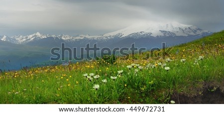 This is blossoming meadow in Caucasus mountains in somber morning - stock photo