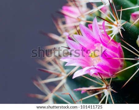 This is cactus flower. - stock photo