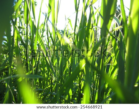 This is field of summer green grass - stock photo