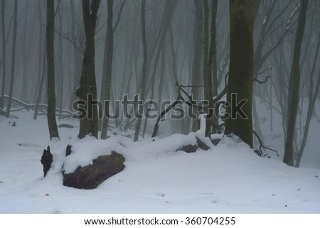 This is foggy morning in Caucasus  forest in winter