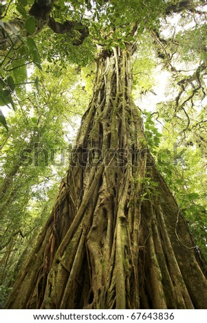 This is in the endangered central american rain forest with very complex vegetation. - stock photo