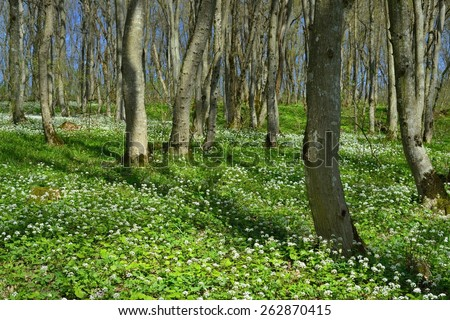 This is light forest in Caucasus nature in spring