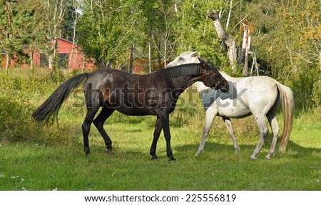 This is love! Beauty Thoroughbred mare and stallion ordinary - stock photo