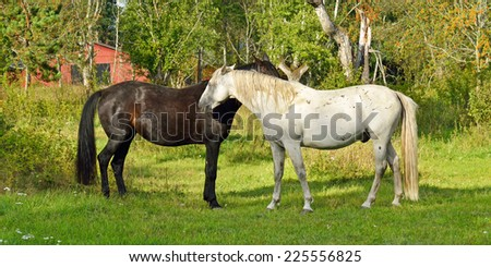 This is love! Thoroughbred mare and stallion ordinary. Tenderness - stock photo
