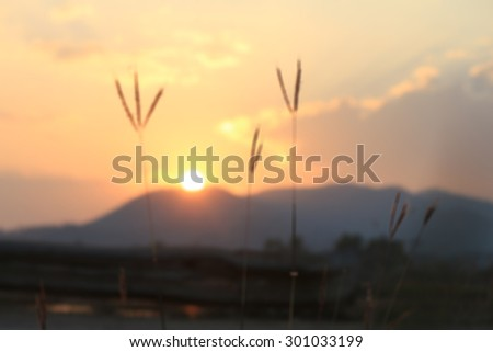 this is sky and sun summer and blur - stock photo