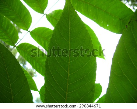 This is structure of green leaf. Closeup - stock photo
