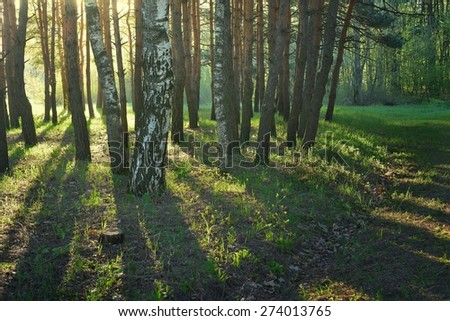 This is sunny morning in colorful wood in spring